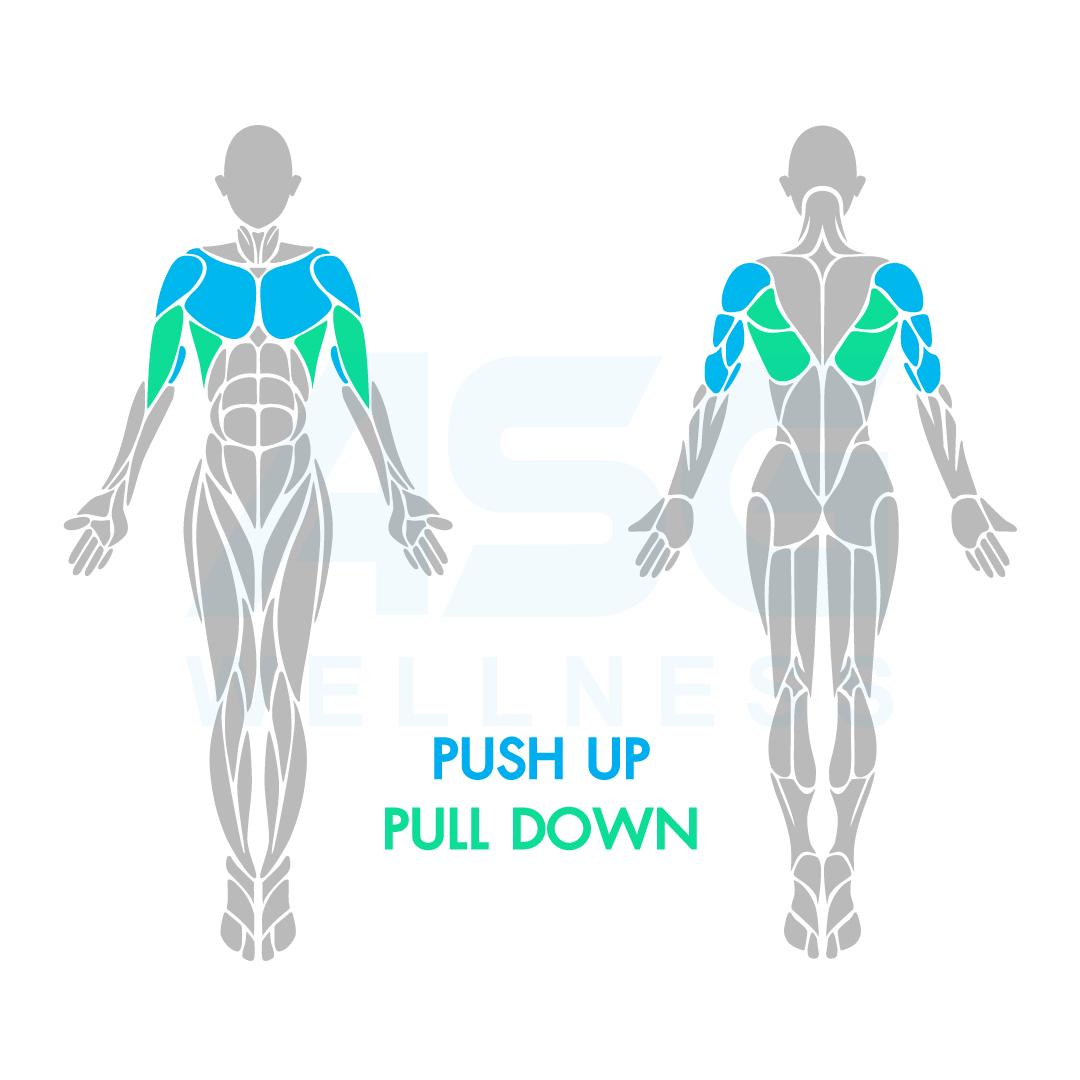 เครื่องบริหารกล้ามเนื้อแขนและอก Push Up / Pull Down